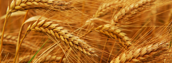 Hard Red Winter Wheat Crop Reaches 29% Of Total Harvest