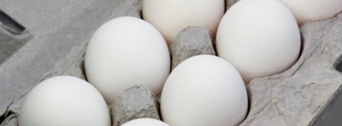 buchmann-eggs-shell-eggs